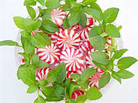 peppermint leaves new.jpg